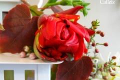 tulipe lanterne
