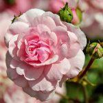 Remplissez votre quotidien de fleurs !