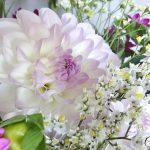 Pour ou contre les sachets nutritifs pour vos fleurs?